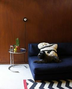 small dog on sofa