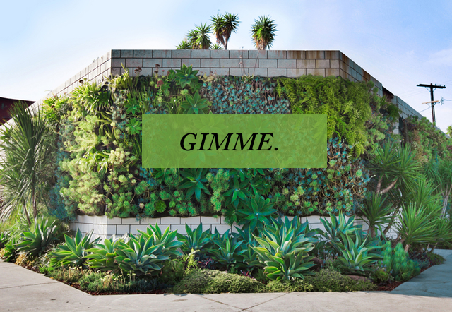 gimme_living_wall